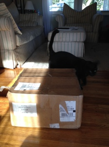 The box is here, Zeke is checking it out!